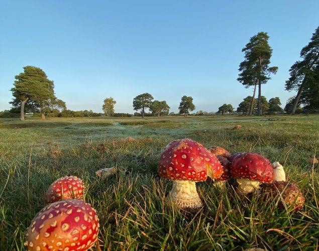 red mushrooms growing in field