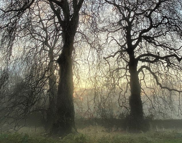 misty forest with bare trees