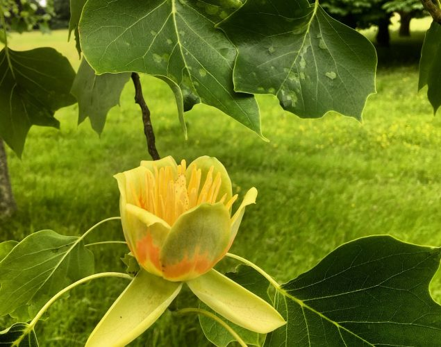 flower growing on leafy bush