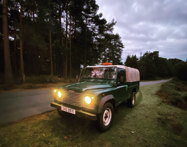 green truck in forest
