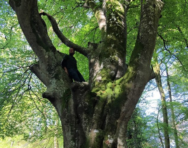 tree with man climbing in