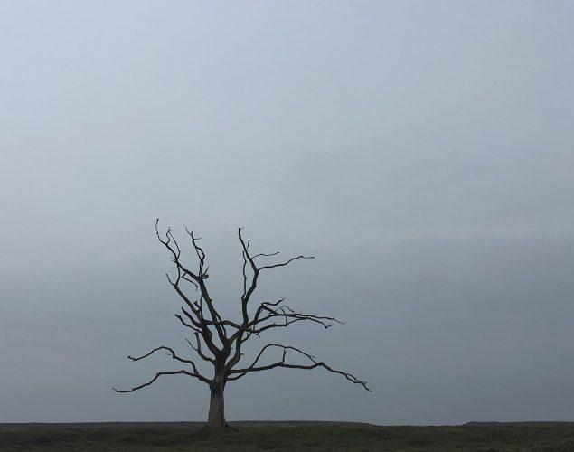 dying tree in empty field