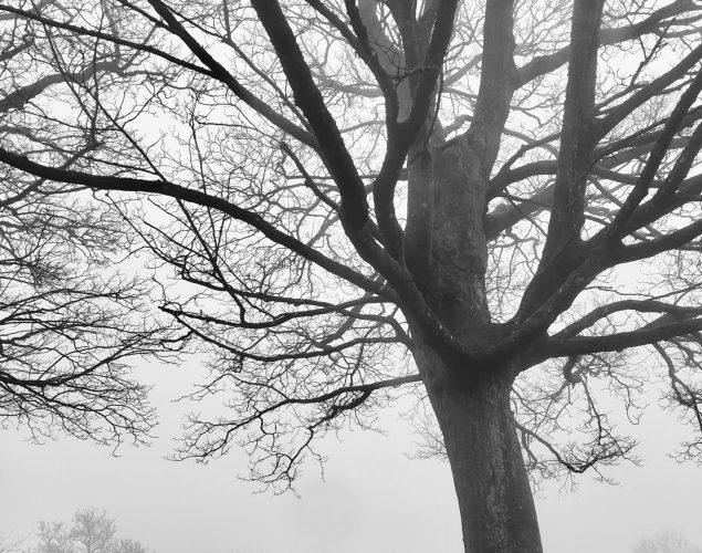 massive tree in park