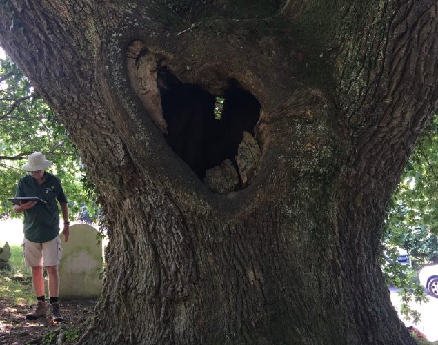 tree with large hole in