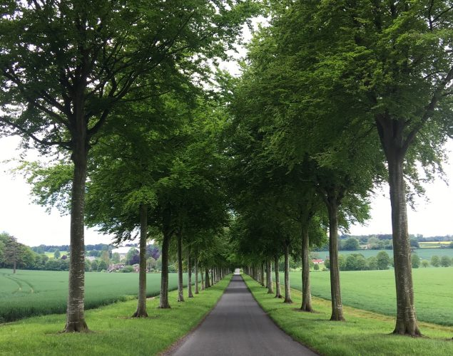 long road lined with trees