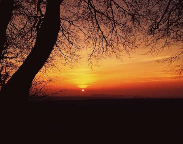 sunset with veteran tree