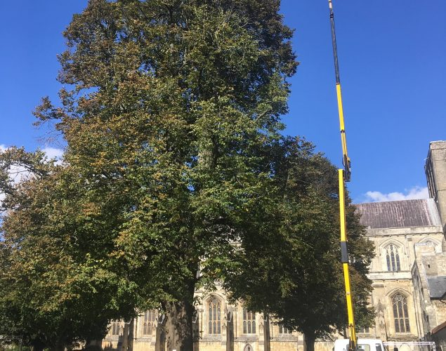 tree near church