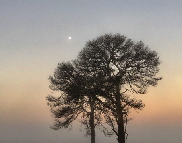 2 trees in foggy field