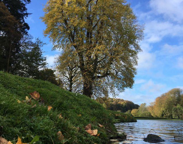 tree near river