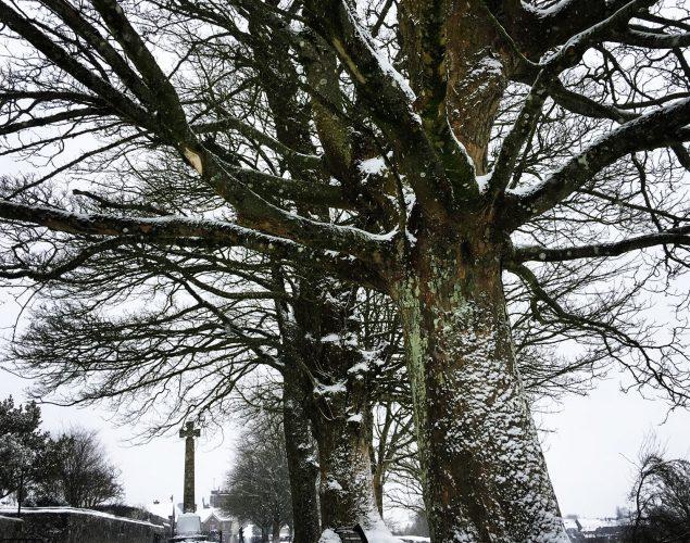 tree with snow around it